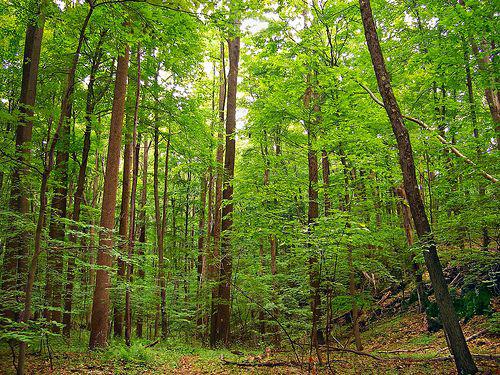 هل يمكن أن يعزز علاج الغابات الصحة